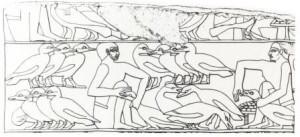 Élevage d'oies pour foie gras, dans l'Égypte ancienne.