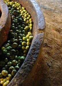 Pommes à cidre prêtes à être pressées.